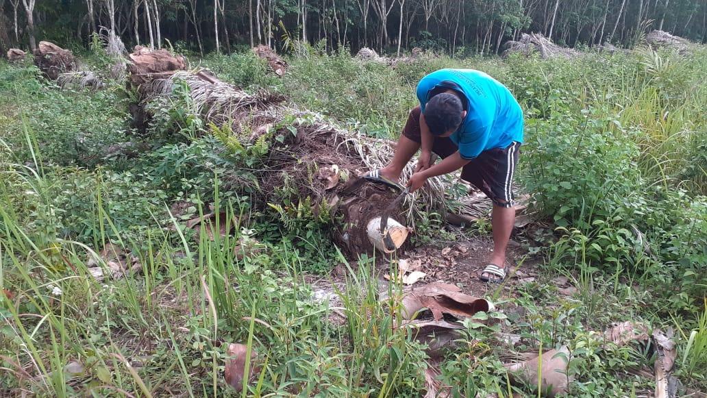 Inovasi Warga Desa Tanjung Sari Mesuji, Manfaatkan Limbah Kelapa Sawit Jadi Gula Merah
